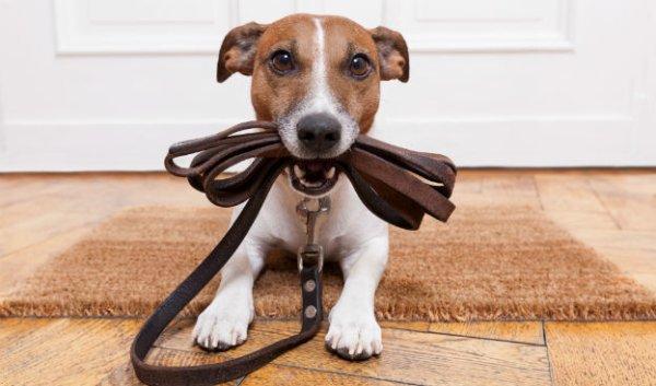 Canicule : les précautions à prendre pour votre animal