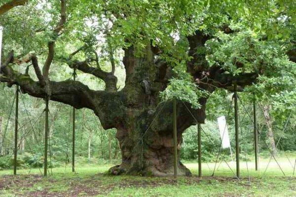 Les  arbres les plus étranges du monde
