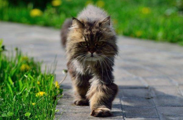 Histoire et origine du chat