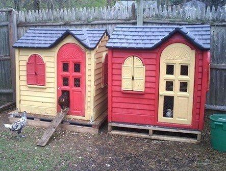 Avoir des poules dans son jardin maty for Avoir une poule dans son jardin