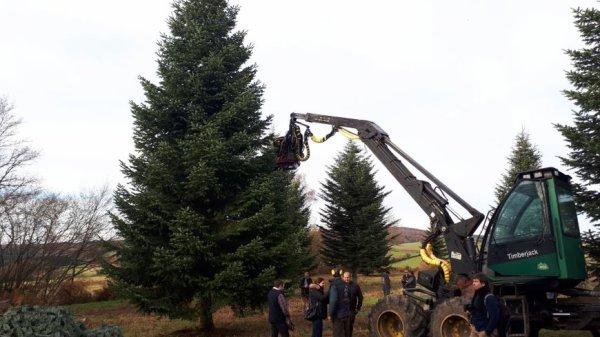 Le sapin de Noël de l'Élysée choisi une nouvelle fois dans le Morvan
