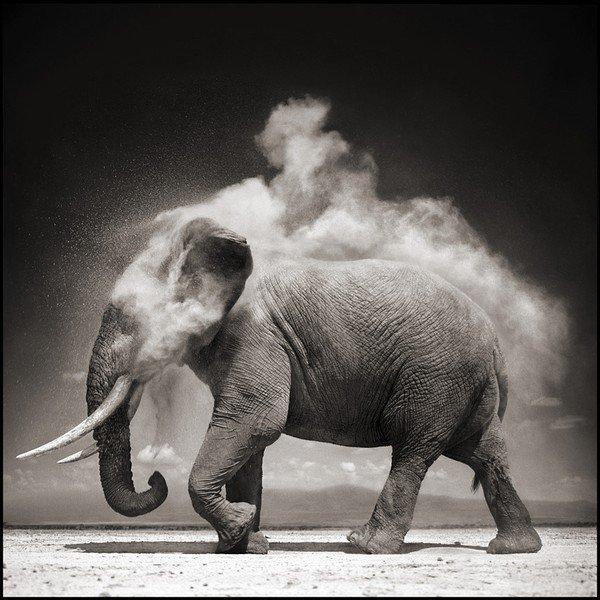Les animaux africains de Nick Brandt ... en noir et blanc !