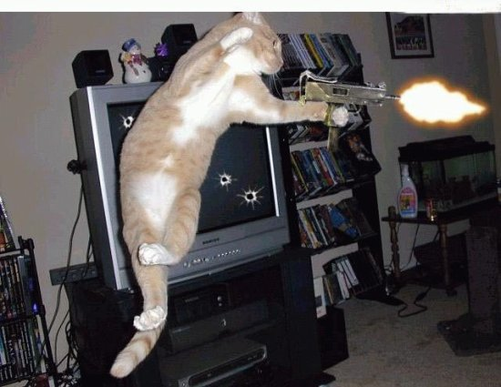 Cats Of Duty : Home Warfare