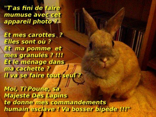 """Pour """"Titi Le Hamster"""""""