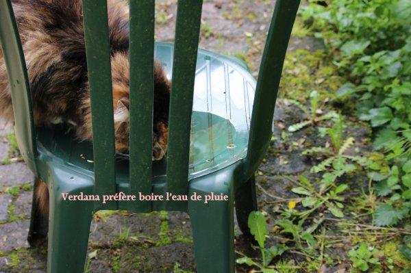 Souvent les chats préfèrent l'eau de pluie à l'eau du robinet
