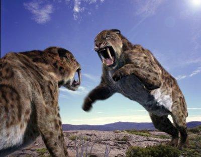Smilodon ou Tigre à Dent de Sabre , Ancètre du Tigre ?