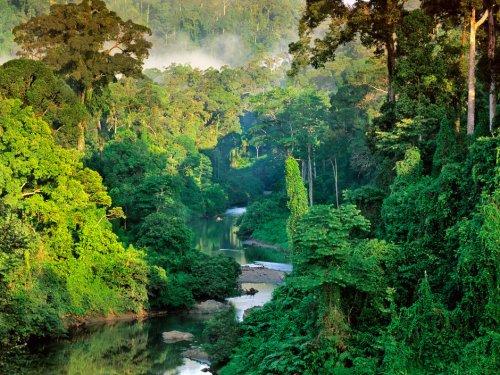 Écologie et répartition du Tigre