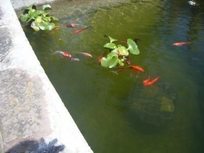 une partie de notre bassin