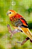 Photo de moi-mes-oiseaux