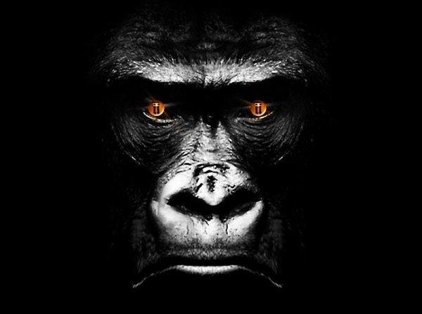 Les singes viennent de sortir du Zoo#Ka2ris