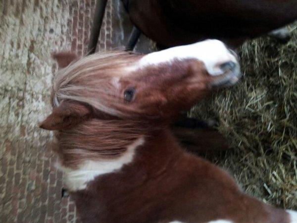 mes jolie chevaux