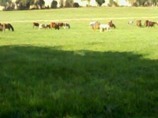 moi et l equitation