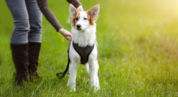 How To Plan For The Perfect Dog Adventure