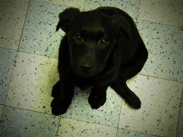 « J'aurai beau tricher et fermer les yeux de toutes mes forces...Il y aura toujours un chien quelque part qui m'empêchera d'être heureuse... »