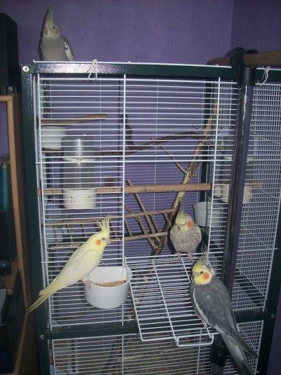 Mes loulous sortent de la cage...