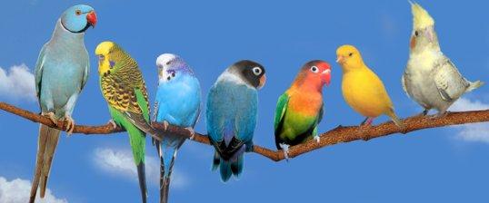 Je garde vos oiseaux