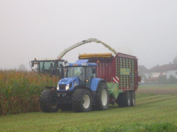 maïs 2011