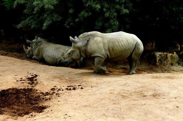 18/06/13 Journée au zoo d'Amnéville.