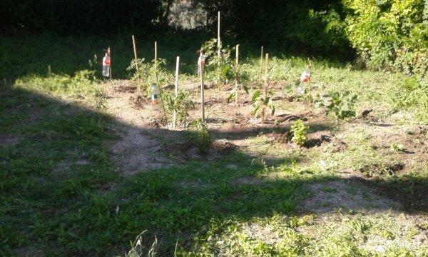 Jardin potager villa ou jabite