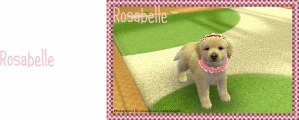Présentation de Rosabelle
