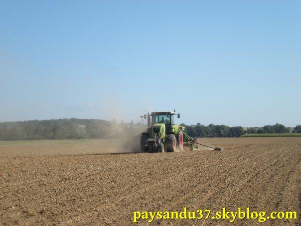 Semis de colza 2010