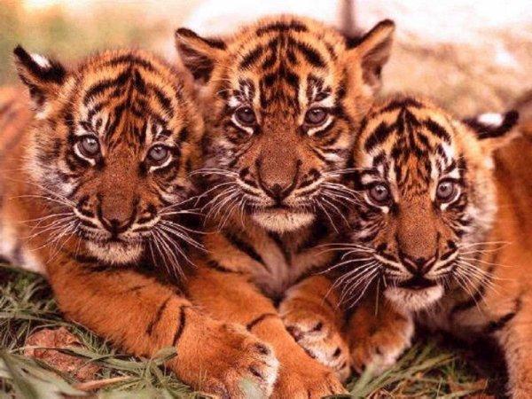 Comment peut-on tuer des animaux aussi beaux