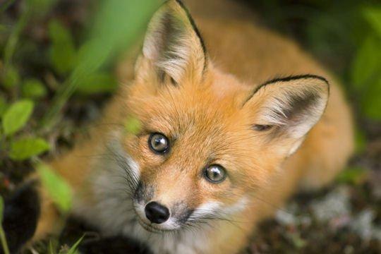 Animaux trop mignons mon blog - Des animaux trop mignon ...