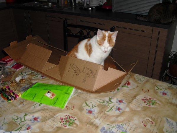 le carton vide  du colis sert, de panier  au squatteur , le chat des voisins