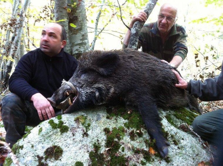 Samedi 3 Novembre 2012 : Des beaux sangliers !
