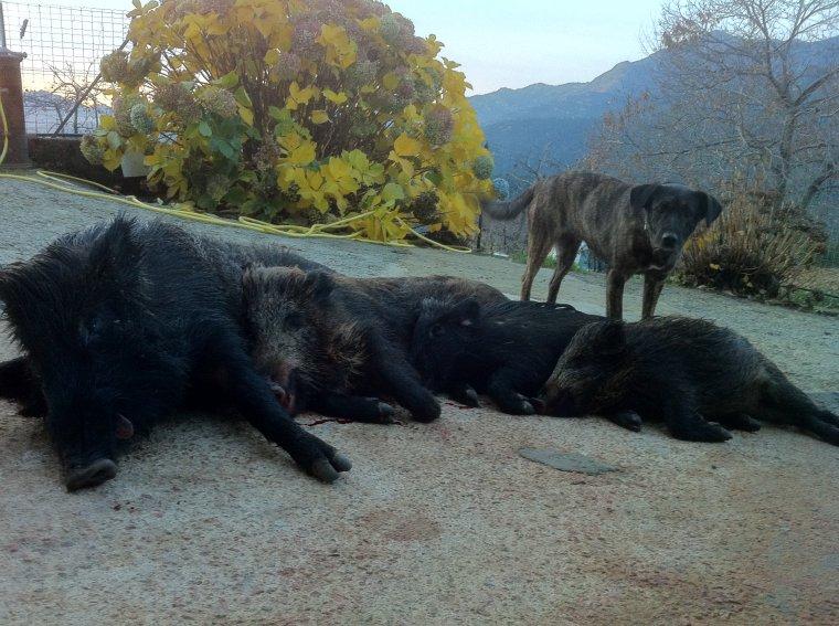 Samedi 22 Décembre 2012 : Gros travail des chiens et récompense pour moi a la clé !