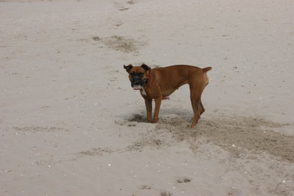 Cassy creuse un trou ds le sable lol