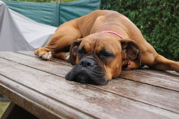Cassy adore dormire sur la table en bois
