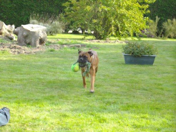 Cooky joue avec sa balle