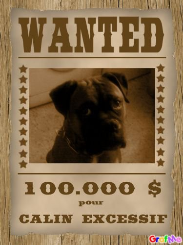 Wanted :)