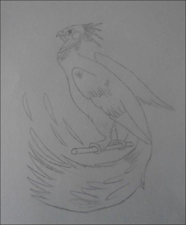 Phoenix♥