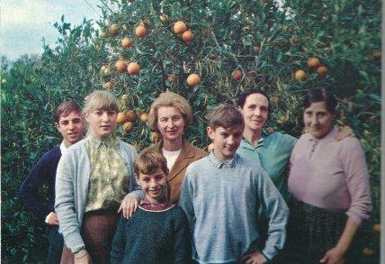 Les orangers de Blida