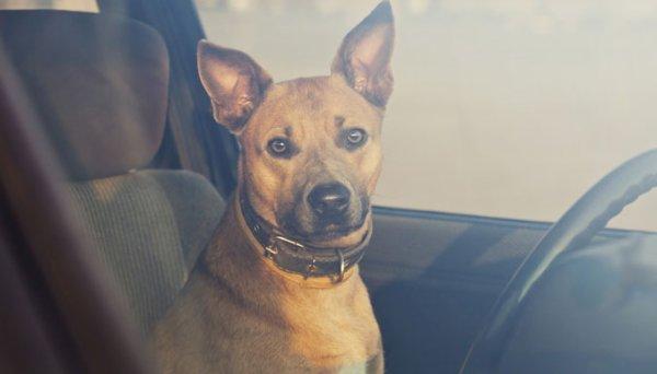 La campagne publicitaire choc contre les chiens enfermés dans les voitures (vidéo)