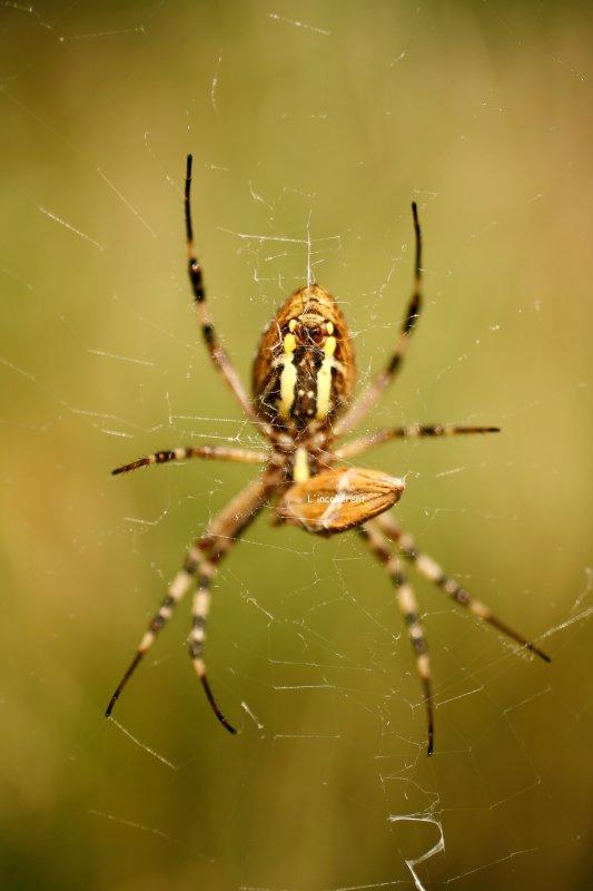 Un innocent qui se balancait, dans une toile toile toile toile d'araignée ♪