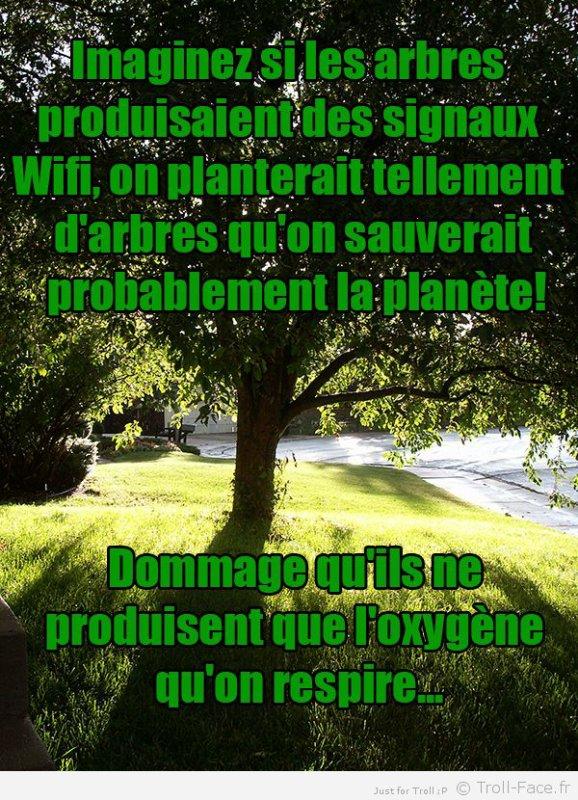 Wi-Fi aux arbres x)...