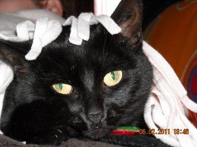 hey mais c'est ma chatte =)