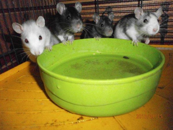 bienvenue ds le royaume des ratons
