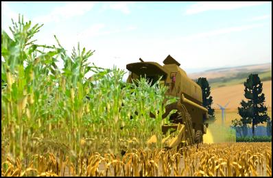 Moisson de maïs 2011 - 2° parcelle - suite et fin