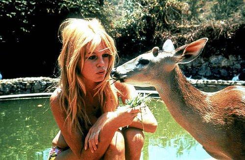 B.B., l'amoureuse des animaux ♥