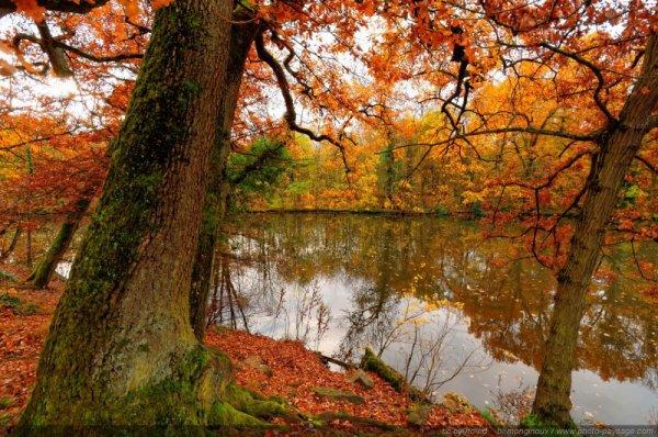 Essences d'automne