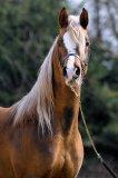 Photo de the-horse-x