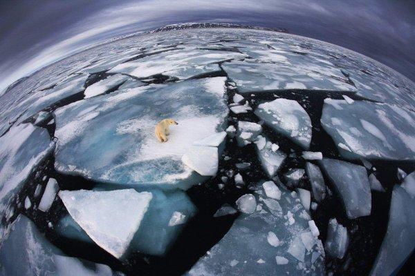 D'ici 30ans les océans serons vides de toutes vies ... Mais ce n'est pas grave nous nous baigneront dans le pétrole ^^