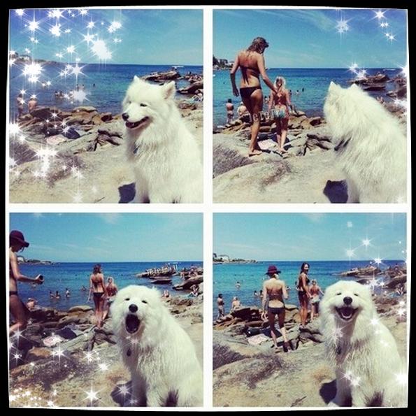 Ce chien connait les vrais bails !