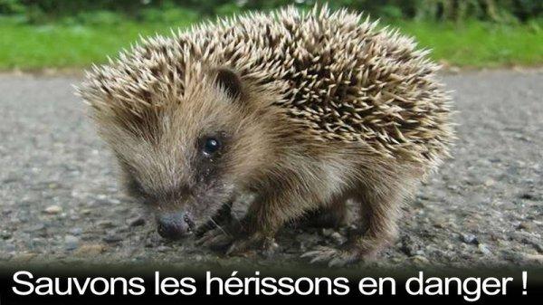 *** SAUVONS LES HERISSONS EN DANGER ***