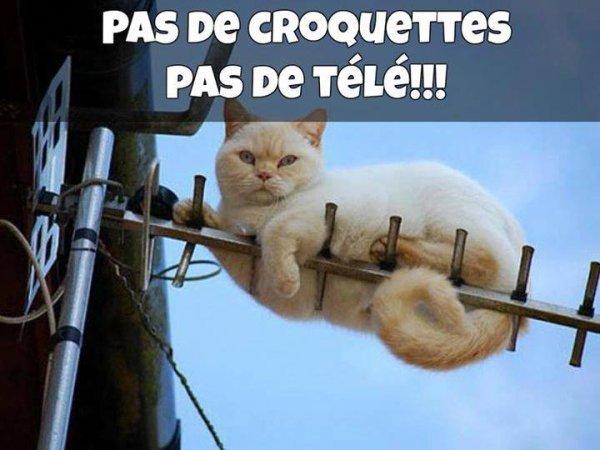 *** PAS DE CROQUETTES PAS DE TELE ***