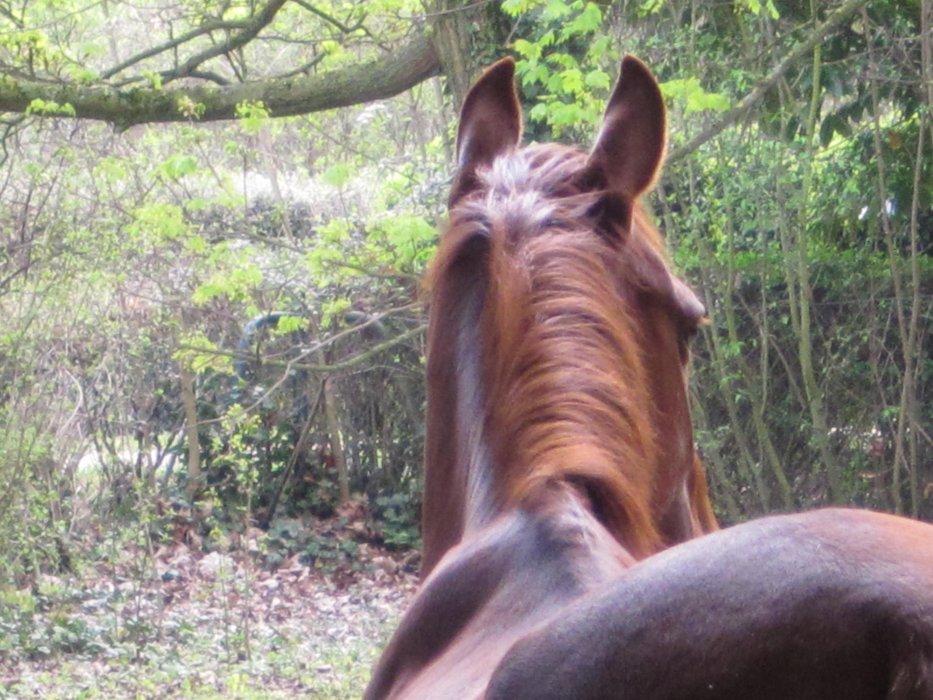"""""""Le cheval n'as pas demandé à faire de l'équitation. Le premier boulot du cavalier est donc de lui faire apprécier ce qu'il fait"""""""